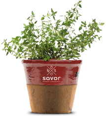 Thyme Everything