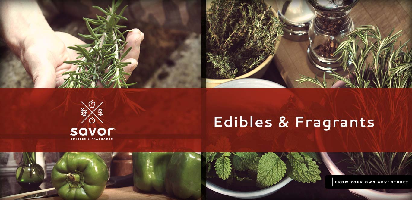 Savor Edibles & Fragrants Products