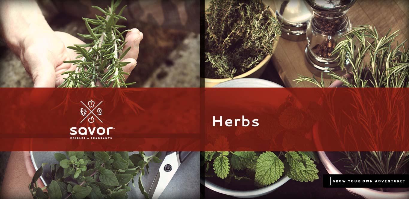Savor Herbs