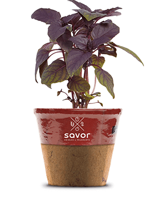 Red Wine Basil